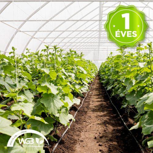 1 éves belső fólia UV 1,8m x 0,04mm x 500m S1B
