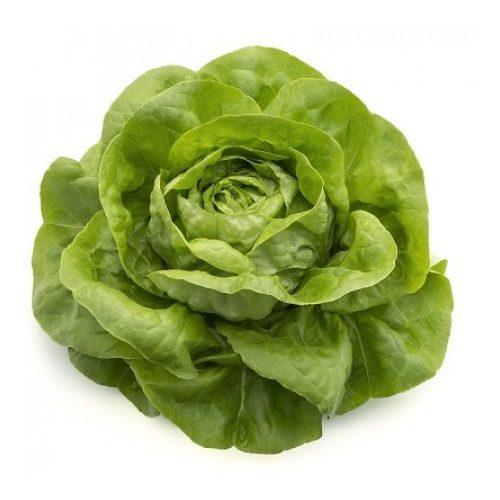 Fejes saláta Pazmanea 1000 szem RZ