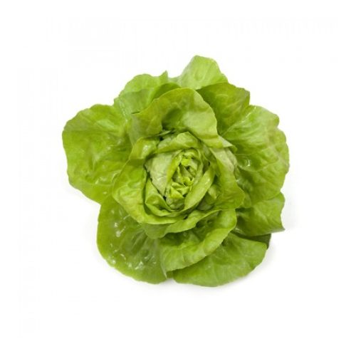 Fejes saláta Jolito 1000 szem RZ