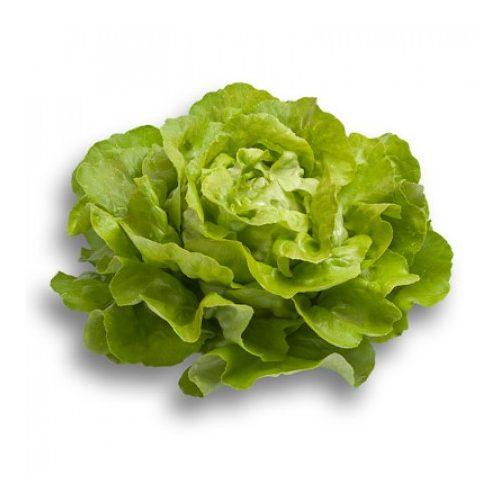 Fejes saláta Almagro 1000 szem RZ