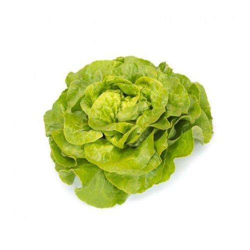 Fejes saláta Antolina 1000 szem RZ