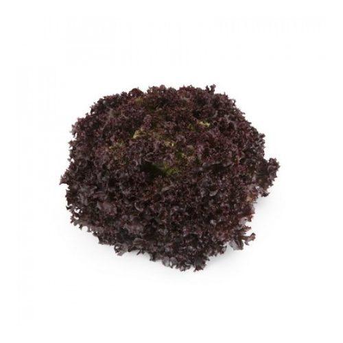Fejes saláta Athmos 1000 szem RZ