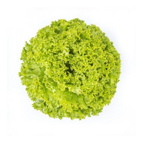 Fejes saláta Langero 1000 szem RZ