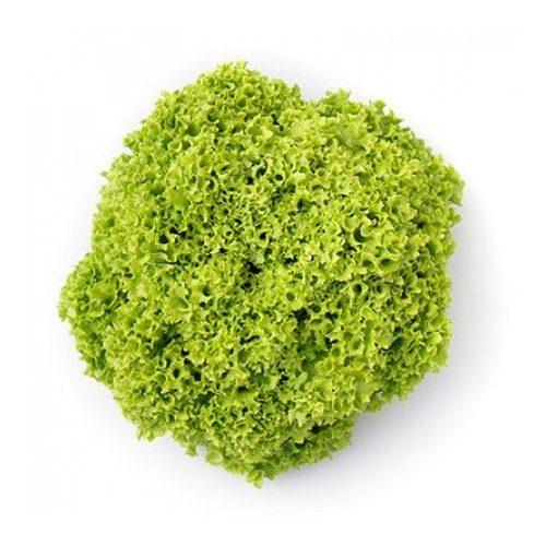 Fejes saláta Limeira 1000 szem RZ