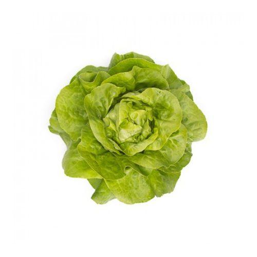 Fejes saláta Sandalina 1000 szem RZ