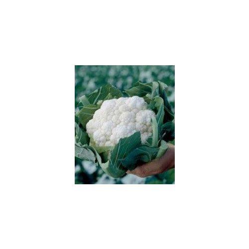 Karfiol Opaal 2500 szem RZ