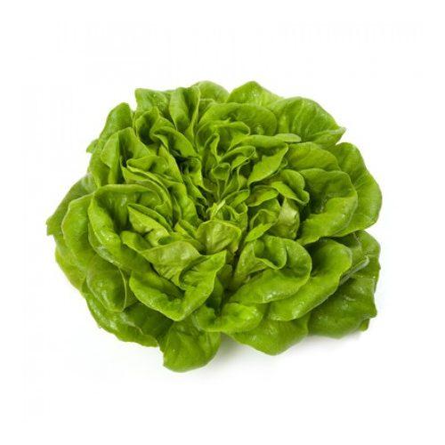 Salanova saláta Aquino 1000 szem RZ