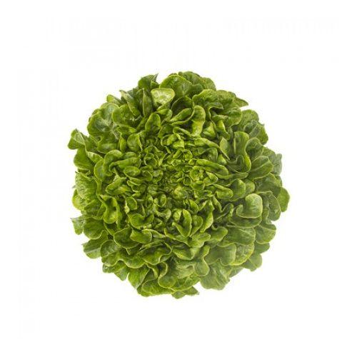 Salanova saláta Cousteau 1000 szem RZ