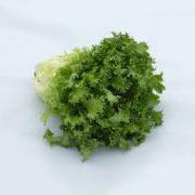 Saláta Pandie 5000 szem SG